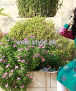 Cut and Kurtis Eid-Ul-Adha Collection 2013 For Women 008