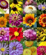 Best Flowers For Garden In Summer Season  001