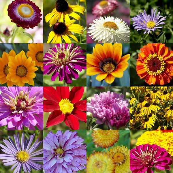 Best flowers for garden in summer season 001 for Best flowers for backyard gardens