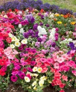 Best Flowers For Garden In Summer Season 003