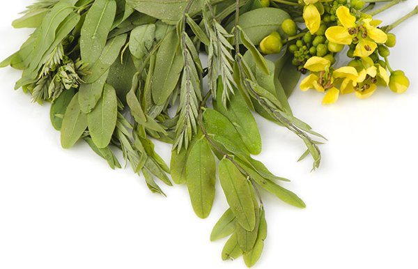 Side Effects Of Using Senna Leaves