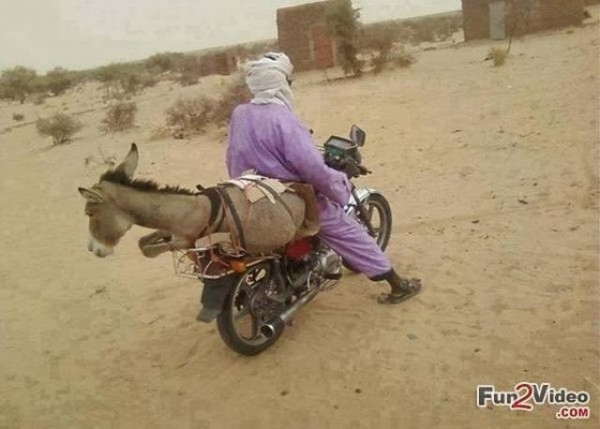 donkey on bike