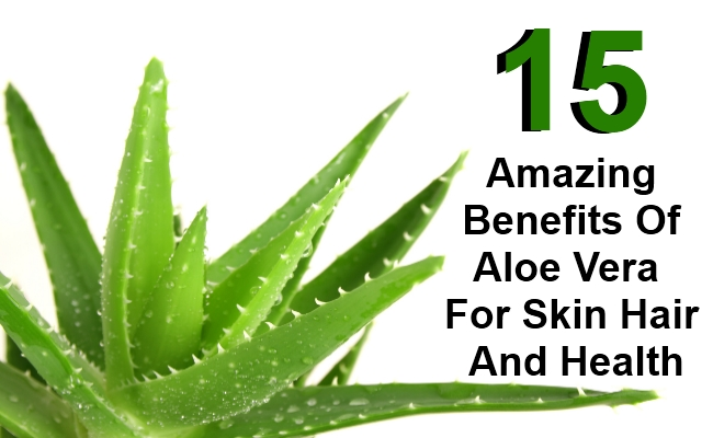 the characteristics and the benefits of the aloe plant