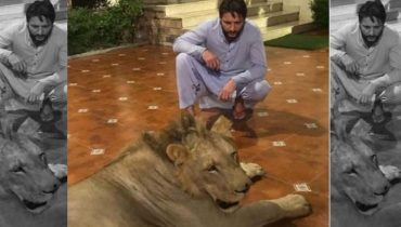 Shahid Afridi Breaks Silence Over Chained Lion Backlash